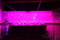 Мои светодиодные светильнички - fitolampa-3-005-004-550x367.jpg